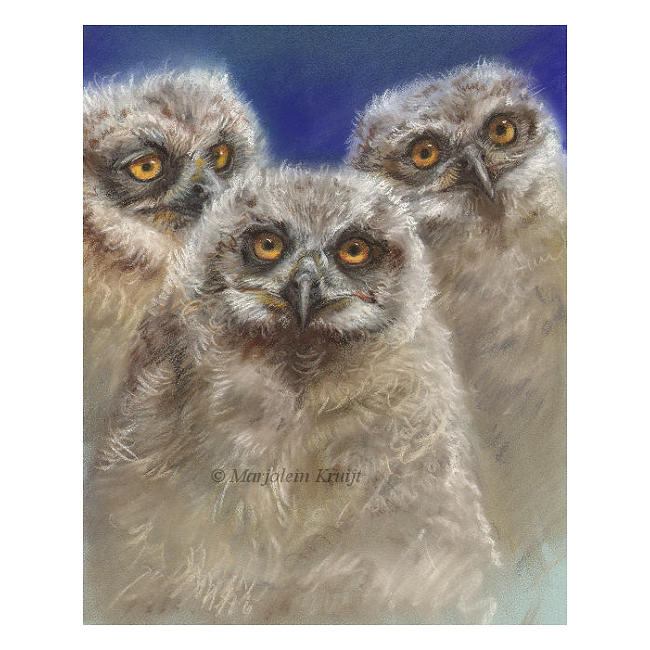 'Owl chicks'-peek a boo, pastel painting (for sale)