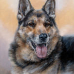 'Shepherd dog'-Igor, 40x30 cm, oil painting (sold/commission)