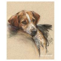 'Beagle', 40x30 cm, pastel paitning (for sale)