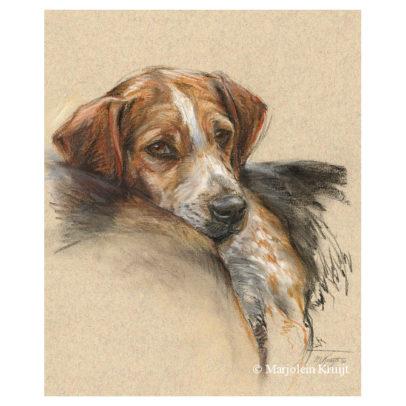 'Beagle', 40x30 cm, pastel portrait painting (for sale)