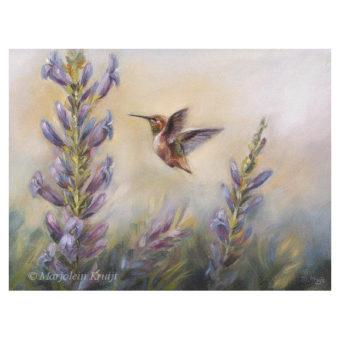'Kolibri' (Selasphorus Rufus), 18x24 cm, olieverf- €650 incl. lijst