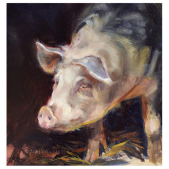 'Varken', 20x20 cm, olieverf schilderij, €950 incl. lijst