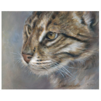 'Viskat'-wilde, 24x30 cm, olieverf schilderij (te koop)