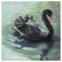 'Gracious'-Black swan, 30x30 cm, oil painting (for sale)