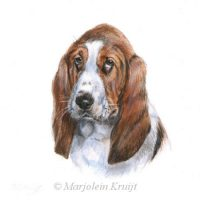 'Basset hound', 13x13 cm, miniature portrait (sold/commission)