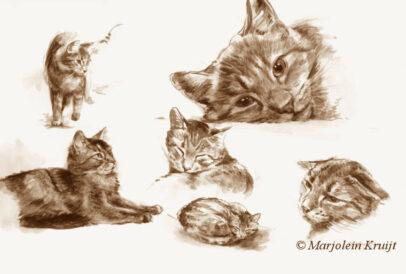 'Cats', 22x32 cm, sepia watercolour (for sale)