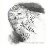 'Snowy owl', 25x25 cm, charcoal sketch (for sale)