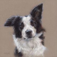 'Bordercollie', 20x20 cm, pastel portret (sold)