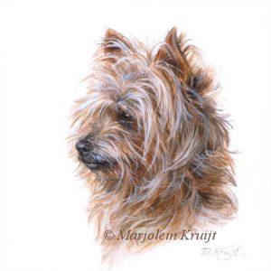 'Yorkshire terrier', miniature portrait , 10x10 cm (sold)