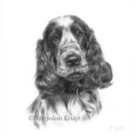 'Cockerspaniel', 20x20 cm, pencil drawing (sold/commission)