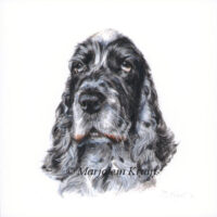 'Cocker Spaniel'-Odin, 10x10cm, portrait in acrylics (sold/commission)