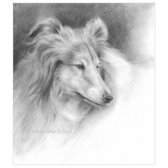 'Collie', 26x23 cm, pencil on paper (for sale)