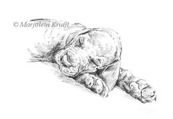'Sleeping puppy', ink drawing (for sale)