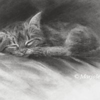 'Sleeping kitten', 22x15 cm, charcoal drawing (for sale)