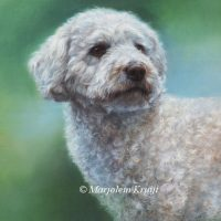 'Labradordoodle', 60x50 cm, oil painting (sold)