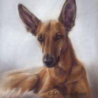 'Podenco/shepherd mix', 50x40 cm,pastel (sold)