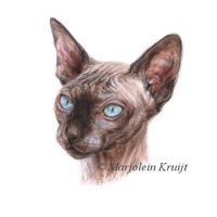 'Sphynx cat'-Rezah, 11x11cm, portrait (sold/commission)