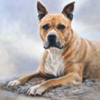 'American stafford'-Easy 60x50cm, oil painting (sold)