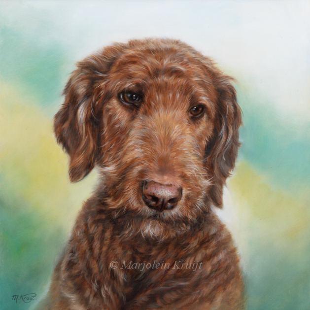 'Labradordoodle'-Pumpkin,30x30 cm, oil painting (sold)