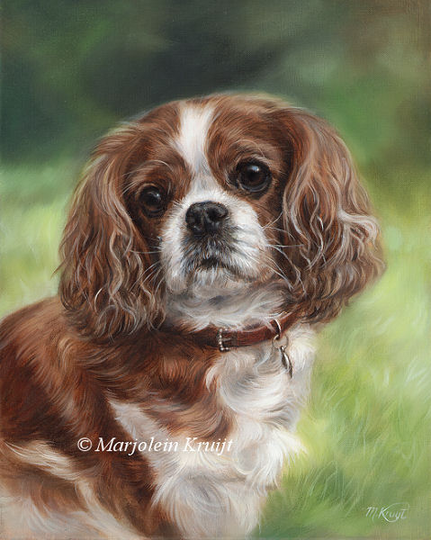 'Cavalier king charles Spaniel', 30x24 cm, oil painting (sold)