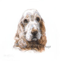 'Cocker Spaniel'-Guido, 10x10cm, portrait in acrylics (sold/commission)