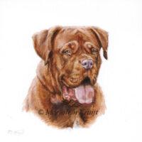 'Bordeau dog'-Caramel portraitt', 10x10 cm (sold/commission)