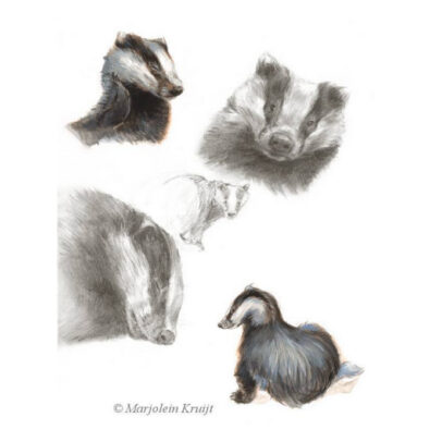 'Badgers', painting in mixed media pencil and acrylics (for sale)