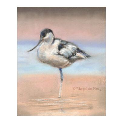 'Pied avocet', 23x28 cm, pastel painting (for sale)