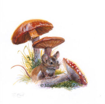 'Mouse with toadstools' 16x15 cm, acrylics (for sale)