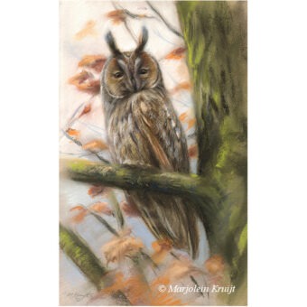 'Long eared owl', pastel painting (for sale)