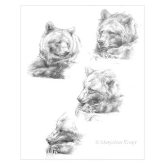 'Bear studies', pencil drawings (for sale)