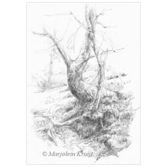 'Tree at the river', Dartmoor, 21x15 cm pencil drawing (for sale)