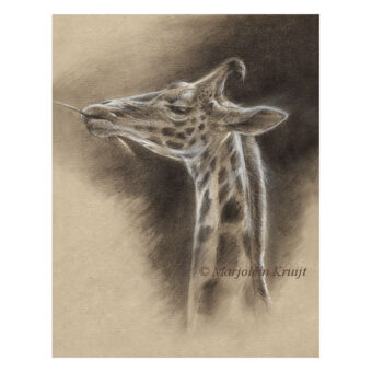 'Giraffe', drawing (for sale)