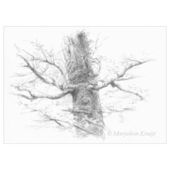 'Mystic tree,' pencil drawing (for sale)