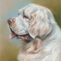 'Clumber spaniel'- Yourgo, pastel portrait painting 30x24 cm (sold/commission)