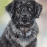 'Flan',pastel painting (sold/commission)