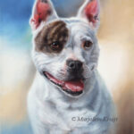 'English staffordshire bulterrier', 40x30 cm, oil painting (sold/commission)