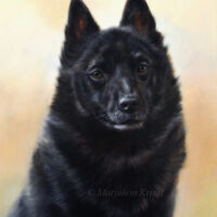 'Schipperke', painting in oil (sold/commission)