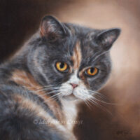 'Sox', cat painting in oil (sold/commission)