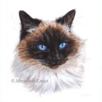 'Beau'. 15x15 cm, portrait in acrylic on paper (sold)