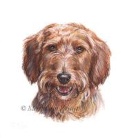 'Dachshund'-Gijs, portret 10x10 cm, acrylic on paper (sold)
