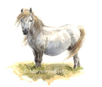 dartmoor pony painting