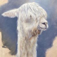 'Alpaca', 24x30 cm, oil painting (for sale)