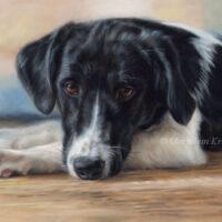 'Stabyhoun X Kooiker'- 24x30 cm, painting on oil (sold/commission)