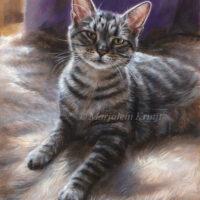 'Poezul'- rescue cat, oil painting 24x18cm (sold)