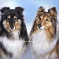 'Shelties', 50x60 cm, oil painting (sold/commission)